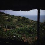 Vermentino Vineyards