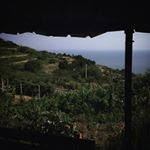 Vermentino Vineyards